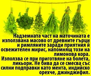 melissa officinalis се използва в ликьори