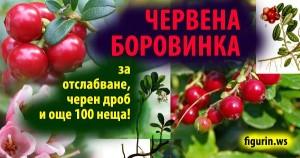 отслабване червена боровинка