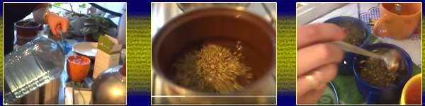 чай от жълт кантарион за стомах