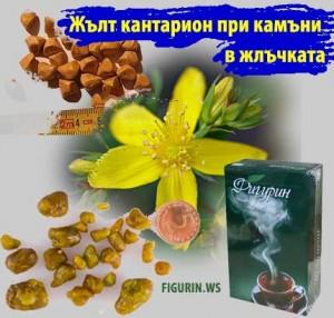 жълт кантарион фигурин камъни в жлъчката