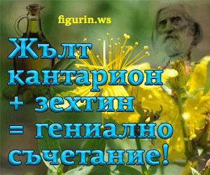 жълт кантарион и зехтин рецепта