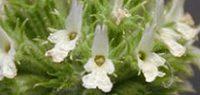 билки при менопауза климакс пчелник - 02