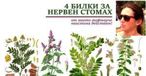 билки за нервен стомах, нередовен стомах