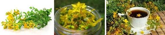 ПМС, билки Фигурин, жълт кантарион
