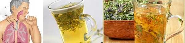 кориандър билка чай лечебни свойства листа