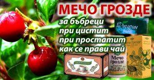 антибактериално, противовъзпалително, антисептично действие на билката мечо грозде за уринарния тракт и половата система