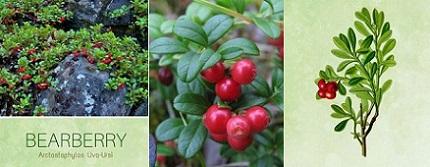 Мечо грозде и други билки във Фигурин