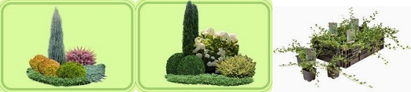 мечо грозде, растение, отглеждане, бране на мечо грозде, сушене, съхранение на билки