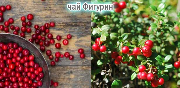 червена боровинка, отслабване, чай от червена боровинка, боровинка